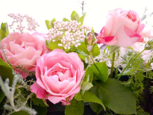 お隣さんのバラ3.jpg