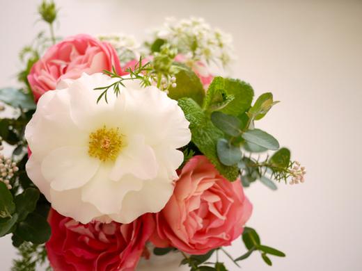 お隣さんのバラ6.jpg