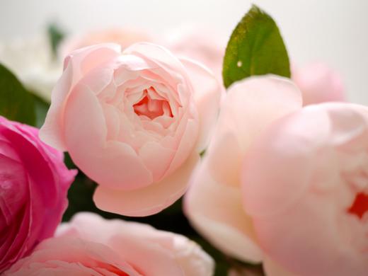バラと芍薬.jpg