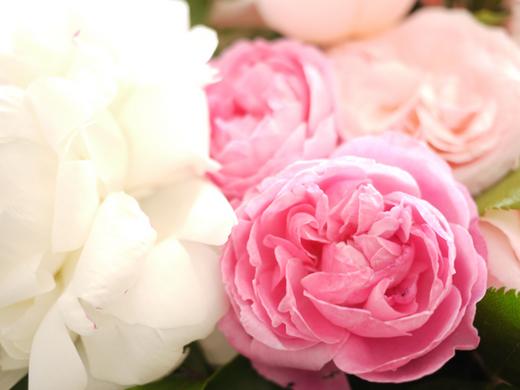 バラと芍薬2.jpg