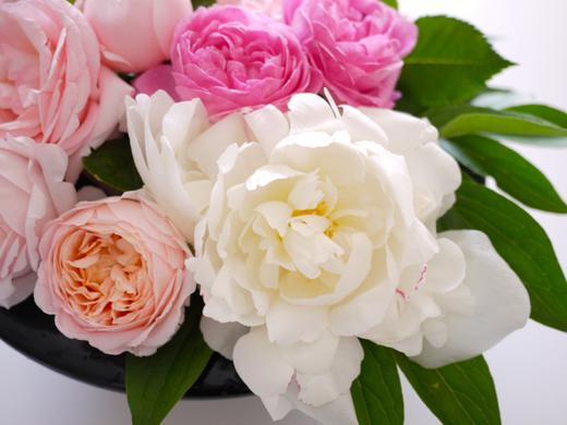 バラと芍薬4.jpg