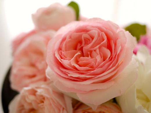 バラと芍薬5.jpg